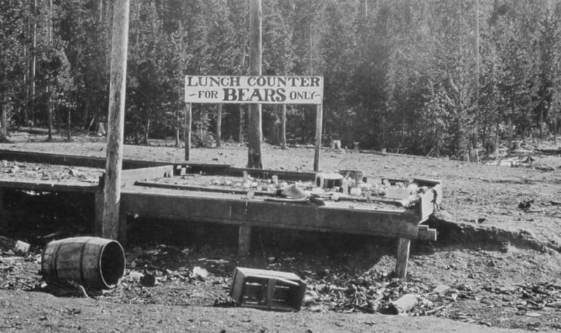 "Black and white image of Yellowstone with a sign reading ""Lunch Counter for Bears Only."""